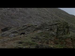 Не кричи «Волки!» / Не зови волков / Never Cry Wolf (1983) Бэллард