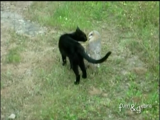 Cat and owl playing - Fum Gebra - Perfect friendship!