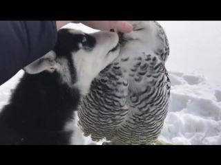 Dog_and_owl