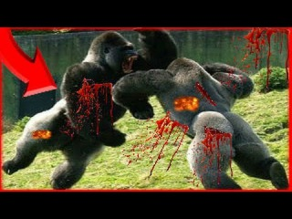 Most Amazing Wild Animal Attack ► Crazy Animal Fights ► Giant Anaconda vs Gorilla, Lion, Bear, Dog