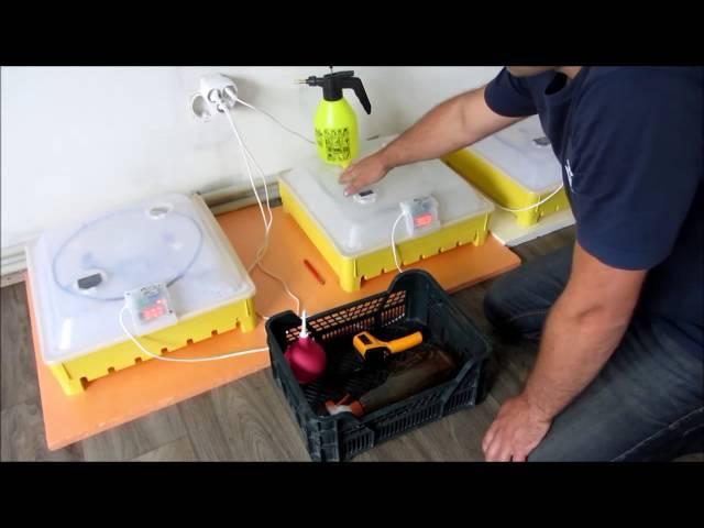 Инкубация гусиных яицМои помощники в инкубации