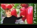 Проверенный способ выращивания рассады ПЕРЦА болгарского сладкого Посев семян перца на рассаду