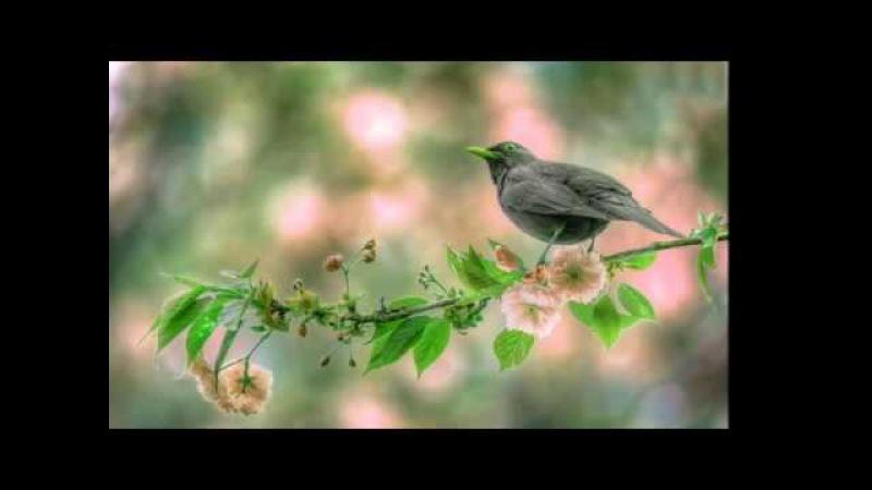 Пение птиц,для хорошего настроения