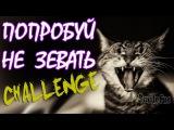 Попробуй Не Зевать!!!  Коты Зевают Challenge Try not to yawn! Cats Yawn
