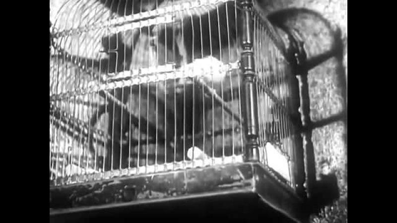 Тайна затонувшего корабля ( ГДР 1954 год )