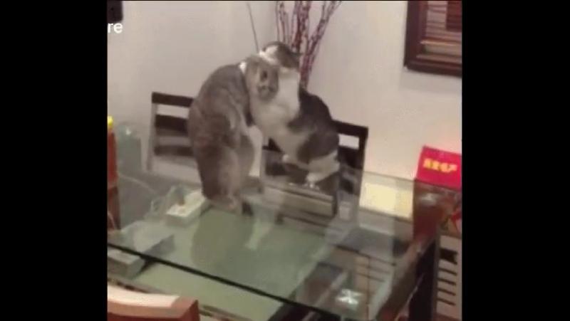 кот борцуха