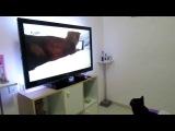 CAT WATCHING HER CHILDHOOD VIDEO