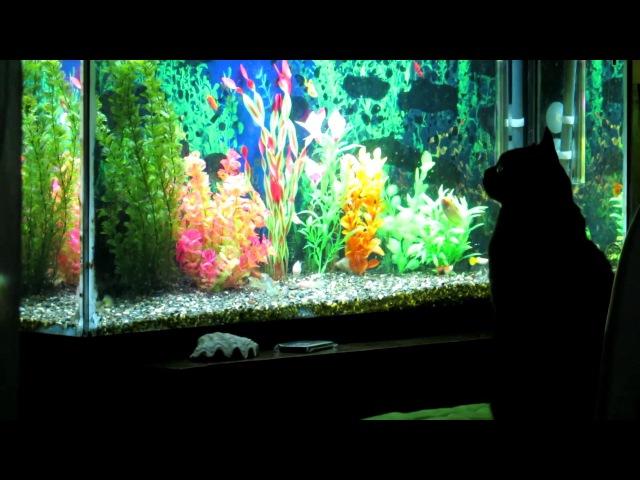 CAT VS FISH TANK
