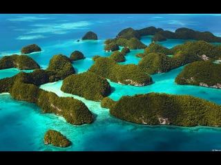 Дикая природа. Удивительный мир морских глубин Багамских островов.