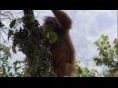 BBC: Жизнь: Приматы / Life: Primates (2009)