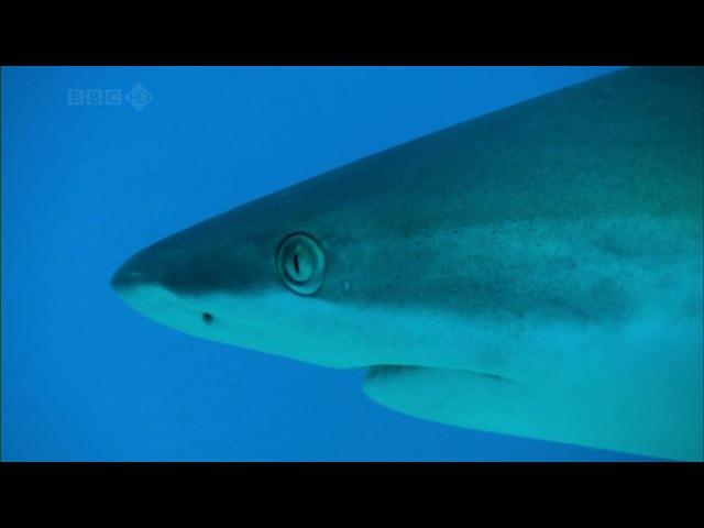 BBC Тайны Тихого океана: Океан вулканов / 4 Серия