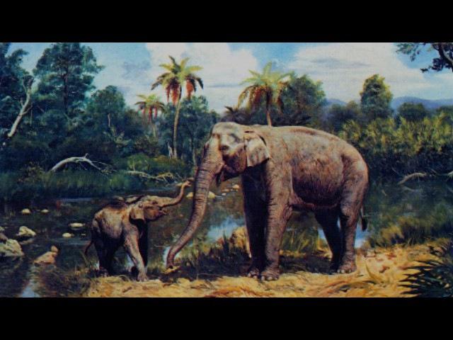 Морфология и эволюция слонов. Рассказывает палеонтолог Евгений Мащенко