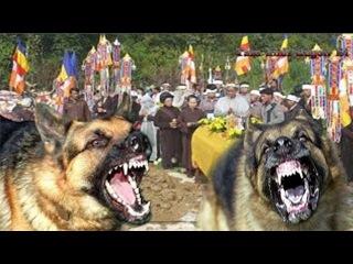 Sự thật kinh dị Chó Dại cắn gặp ngay Đám Tang kết quả sẽ ra sao.....👽 || Khám Phá Huyền Bí