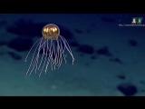 Чо происходит на дне Мирового океана