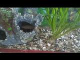 аквариум спустя месяц с чем-то