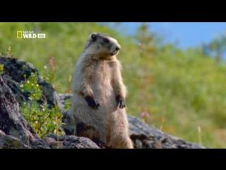 NG Бойцовский клуб для животных - Animal Fight Club (S02, 2014)2