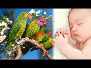 пение птиц  | Удивительный сон трюк | успокаивающий белый шум