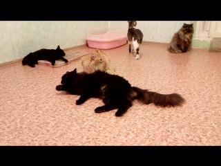Комната где живёт 12 кошек. Рыжий, Марфуша, Нафаня, Матильда, Шейла, Ночка, Проша, Джессика , Липа, Глаша, Блосса и Мишель. 31.1