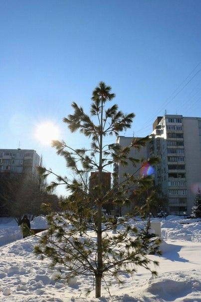 Зимнее и уже почти весеннее солнце