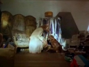 Флюк Fluke 1995 Трейлер