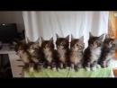 Доброе утро начинаем с зарядки даритьтепло друг радость кошки котики кот котенок минск minsk zooh