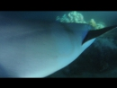 Night_Dive_Tawny_Nurse_Sharks_2