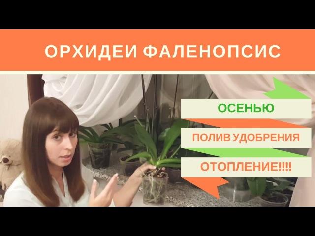 Орхидеи Фаленопсис Осенью: Уход, Полив, Удобрение, Батареи