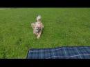 Играем с Кексиком в парке (Пекинес  Собака)