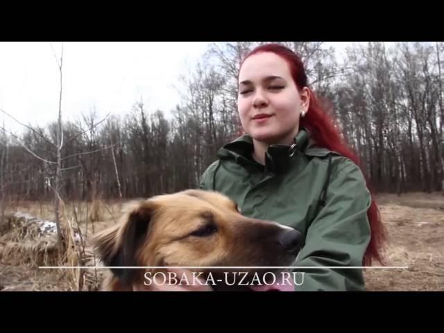 Первый Фильм О ВОЛОНТЕРАХ.Приют Щербинка ЮЗАО.SOBAKA-UZAO.RU