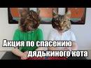 Win Condition Магия - Спасет котов