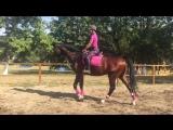 Джони ,очень большой и умный конь