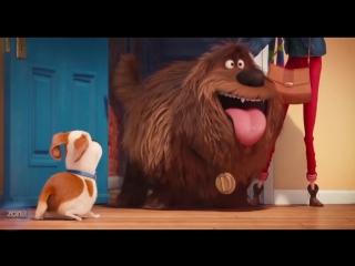 Тайная жизнь домашних животных | Трейлер №3 | Премьера:  18 августа 2016 года