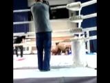 Rusiya-Orenburg-MMA V