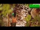 Камшат Жолдыбаева Суйиктим Сүйіктім жана казакша клип новый - Mp4 - 720p