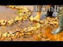 ЛОВУШКА ДЛЯ РЫБЫ - КАМЕННЫЙ ЛАБИРИНТ | Primitive Stone Fish Trap