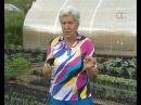 Голова садовая Как уберечь от проблем лук и чеснок