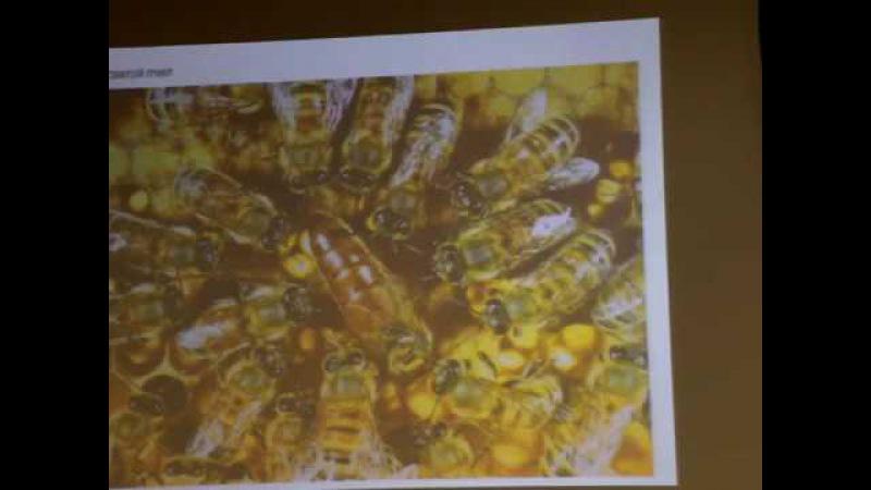Гуреева О.Е. - Оздоровление пчелами в висцеральной практике