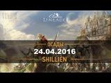 Lineage 2 Classic [Стрим] Осады на Shillien. 24.04