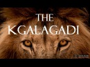 The Kgalagadi (KTP) - A Kalahari Self-Drive Safari Adventure Full HD