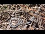 Змеи. Пятая видеосъёмка. 21 мая 2017 года.