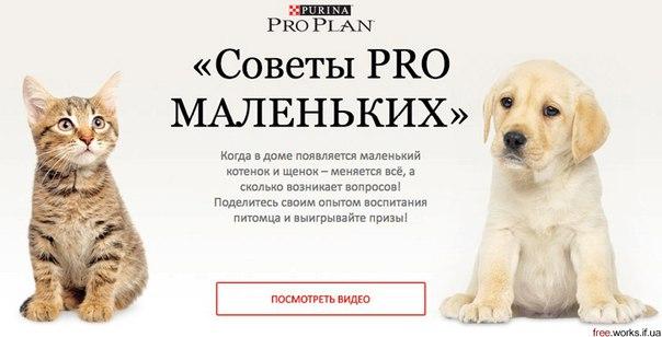 Бесплатный Образец Корма Для Кошек