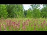 Звуки живой Природы - Пение птиц и цветение трав ...