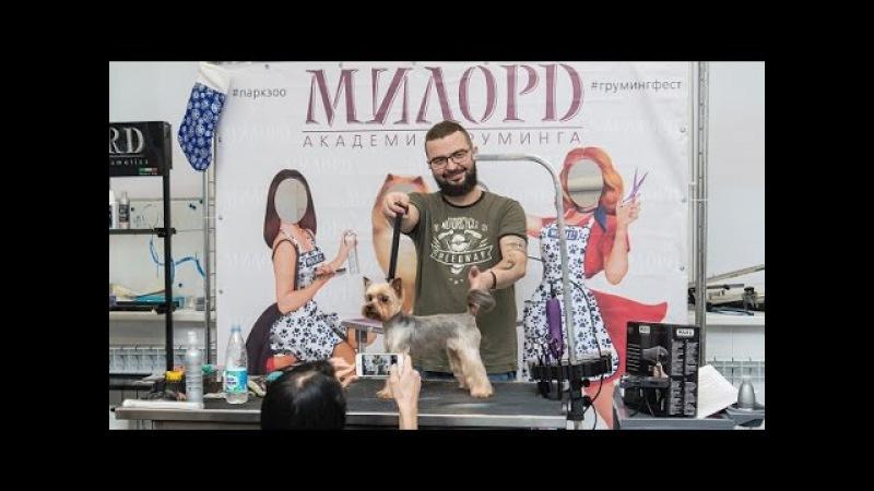Стрижка йоркширского терьера Роман Фомин Мастер класс по грумингу йорка