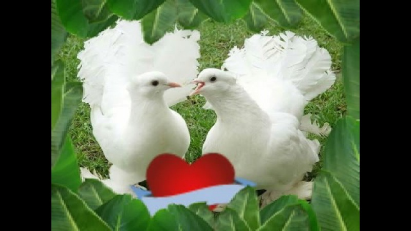 Голуби целуются на крыше Сергей Одинцов и Азамат Исенгазин