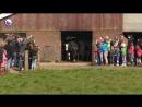 Веселые голландские коровы