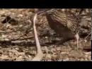 Птица убивает змею