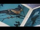 Крылатая радуга. Книжно-иллюстративная выставка к Международному дню птиц