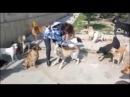 Зоозащитницы - живодерки из Баку
