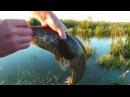 рыбалка в запрет!!!(30.мая.2016).змееголов достойный боец.