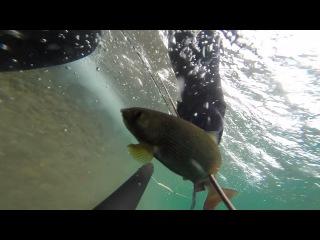Другой мир, другая жизнь. Подводная охота в сибири. spearfishing.